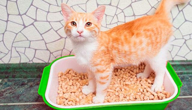 Чем можно заменить наполнитель для кошачьего туалета?