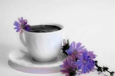 Заменитель кофе – цикорий